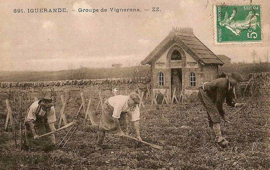 Groupe de vignerons à Iguerande (71)