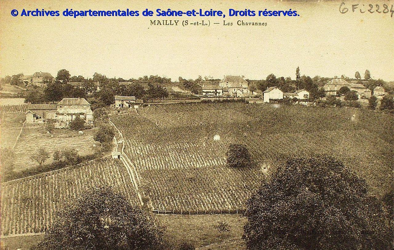 Rangs de vigne à Mailly, coteau des Chavannes (AD71)
