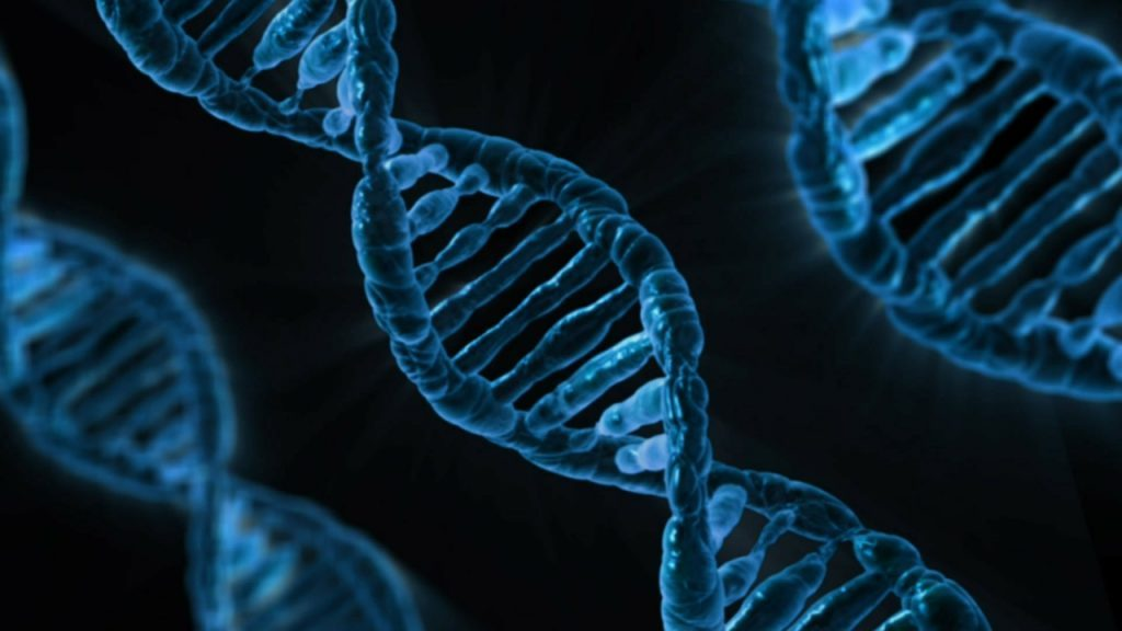 Double hélice de l'ADN